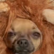 Pewdipie finto tv gameplay's avatar