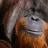Wild12002's avatar