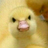 Sanches Borec's avatar