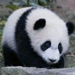 Starkiller131's avatar