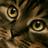 Каштанозвёздая's avatar