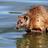 Platypus550's avatar