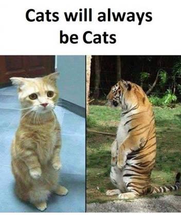Cat Mewme!