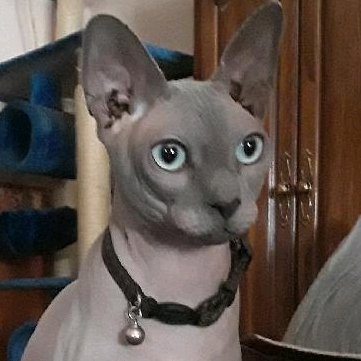 Gavcat's avatar