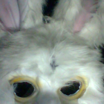 The Derbyshire Rabbit's avatar