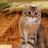 ЗлатоБурка's avatar