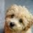 RightPlash's avatar