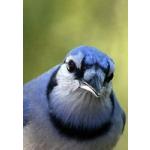 BlueJYT's avatar