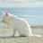 Ginstersee Katzenfan's avatar