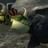 Toothlessnut's avatar