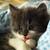 Cat-Murcat