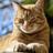Zonblad's avatar