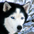Snowdog67