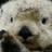 OceanIvy23's avatar