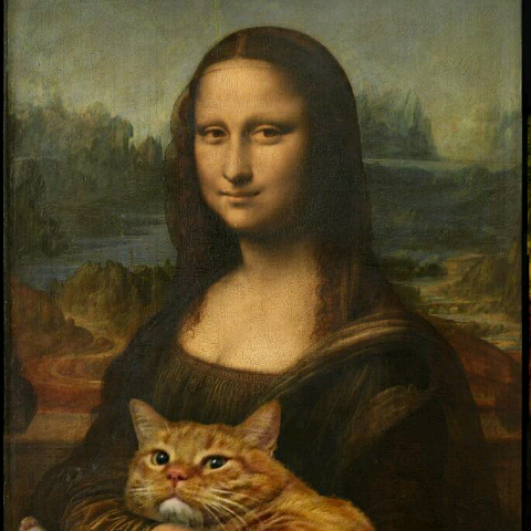Nikol Cat5