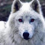 "Ghost""wolf.0629's avatar"