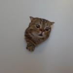 Androbirb's avatar