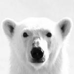 Professor PolarX's avatar