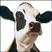 HC Robin026's avatar