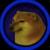 DogeShibeSquarepants2019