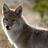 Coyote0620's avatar