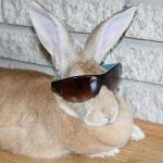 Adrian the Rabbit