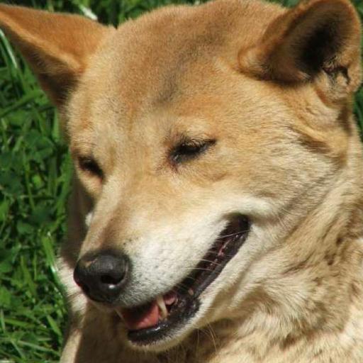 Dingo Dan14's avatar