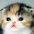 Mrsharkwatermelon's avatar