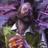 AllYourFavorites's avatar