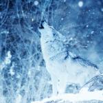 Wolfy10