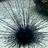 SeaUrchin476's avatar
