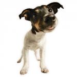 Tinydog1234