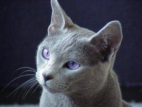 Vous l' appelleriez comment ? Moi je dis Oeil de Mauve.