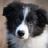 Twinkelkit's avatar