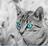 Lune d'Argent 03's avatar