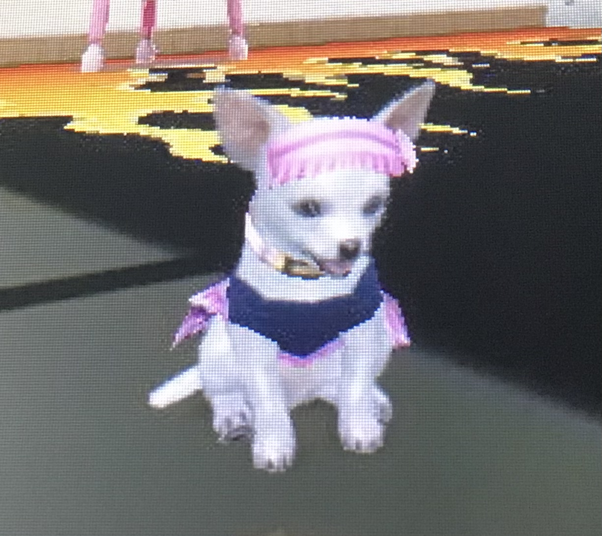 Babby The Chihuahua