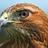 Hawkblossom45's avatar