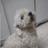 BenshCarrot's avatar