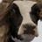 JM1998's avatar