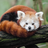 CreativeRedPanda's avatar