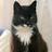 Дикая's avatar