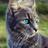 Водопадная Звезда's avatar