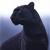 PantherHeart1