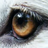 DpWang74's avatar