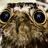 Pughorse770's avatar