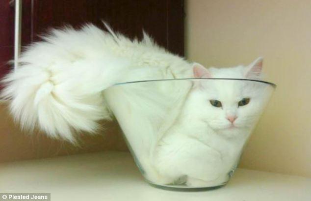 Basically cats are liquid