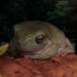 Cadethefrogger