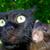 Ratticus and Catticus