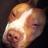 HacktasticToken833's avatar