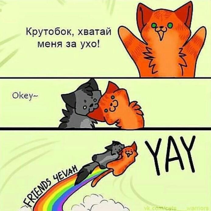 Коты воители смешные картинки с надписями до слез